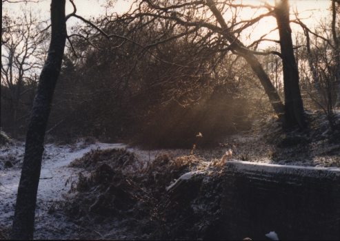 Winter on the common